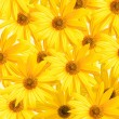 Royalty-Free Stock Photo: Yellow background from flower
