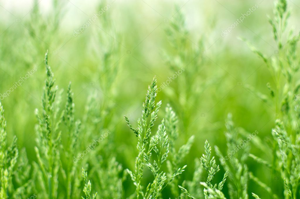 Green grass a blurred background — Stock Photo #10736779