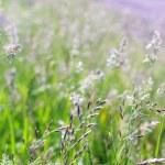 Grass — Stock Photo #10998294