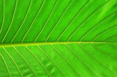 Leaf as background — Stock Photo
