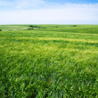 Stock Photo: Field