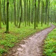 Green forest — Stock Photo #11613115