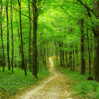 Green forest — Stock Photo #11613138