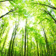 Green forest — Stock Photo #11613697