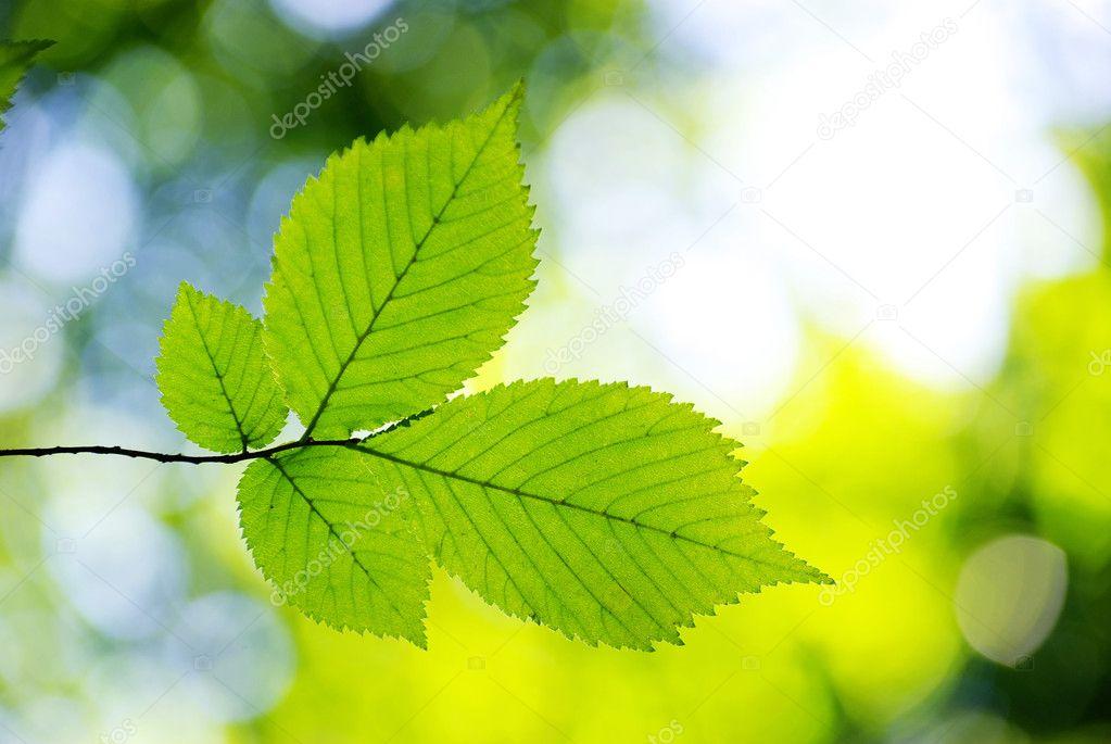 在阳光灿烂的日子中的绿色的树叶背景– 图库图片