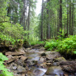 Green forest — Stock Photo #11856051