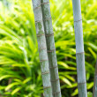 Bamboo — Stock Photo #11856149