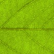 Leaf  background - Stock Photo