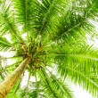 Leaves of palm tree — Stock Photo #12171191