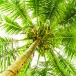 Leaves of palm tree — Stock Photo #12183597