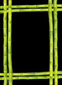 Bamboo frame — Stockfoto