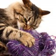 Cat and a ball of thread — Stock Photo #10809987
