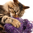 Cat and a ball of thread — Stockfoto