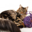 Cat and a ball of thread — Stock Photo