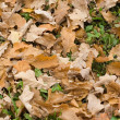 Dry automn leaves — Stock Photo