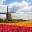 Windmill with tulip field — Stock Photo #11144163