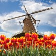 Windmill with tulips, Holland — Stock Photo #11144220