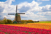 Windmill with tulip field — Stock Photo
