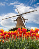 Windmill with tulips, Holland — Stock Photo