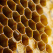 Honey cells close-up — Stockfoto #11974734