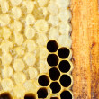 Honey cells close-up - Stock Photo