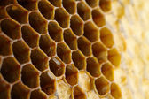 Honey cells close-up — Stock Photo