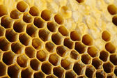 Honey cells close-up — Stock Photo
