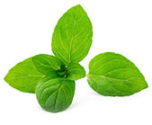 Mint leaves isolated on white — Stock Photo