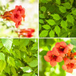 Stock Photo: Orange Flower Design Collage