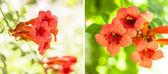 Kwiat pomarańczowy projekt kolaż — Zdjęcie stockowe