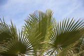 African Palm trees at bright summer day — Stock Photo