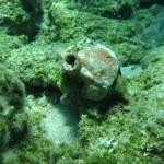 Ancient amphora on the sea bottom — Stock Photo #11761473