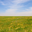 Stock Photo: Cultivated field