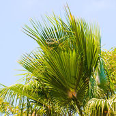 Palmtree over blue sky — Stock Photo