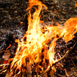 Fire background — Stock Photo #11461044