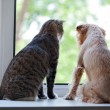 Cat and dog on the window — Stock fotografie
