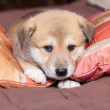 Portpait puppy — Stock Photo