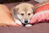 Portpait puppy — Stock Photo