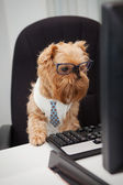 Dog Manager — Stock Photo