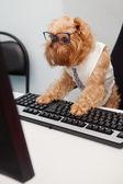 Dog Manager — Stock Photo