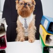Dog in glasses - Stock Photo