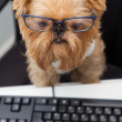 Dog and computer - Stock Photo