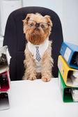 Dog in glasses — Stock Photo