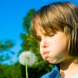Little girl blowing dandelion on the meadow — Stock Photo