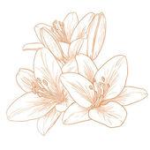 Wektor lilie kwiatów. — Wektor stockowy