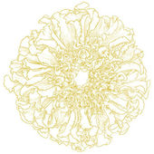 Vector marigold flower. — Stock Vector
