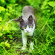 Cat in Grass - Stock Photo