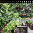 Health resort in green rainforest. - Stock Photo