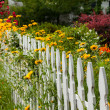Wild flowers growing over white picket fence — Stock Photo #10810537