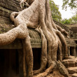 Ta Prohm Temple in Angkor Thom Cambodia — Stock Photo